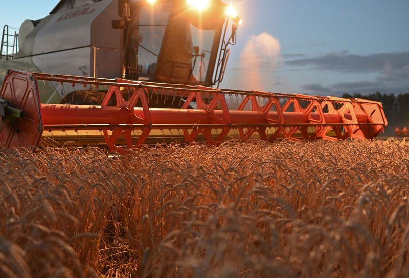 Sovecon corta previsão de safra de trigo de 2021 da Rússia