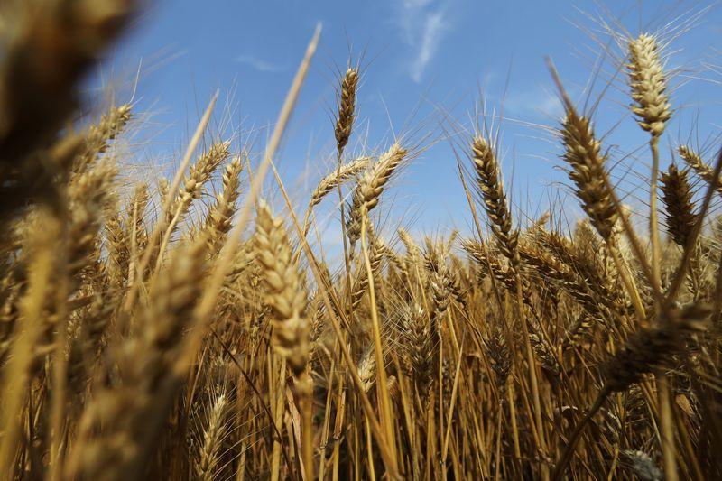 Safra de verão de trigo da China avança 2% em 2021, diz órgão de estatísticas