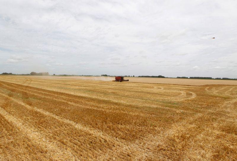 Bolsa de Rosário eleva projeção de safra de trigo da Argentina 2021/22 para 20,5 mi t