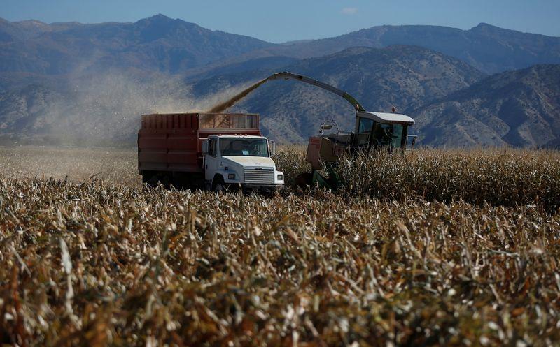 Colheita de grãos 2021 da Ucrânia chega a 8,6%, com produção de 5,5 mi t