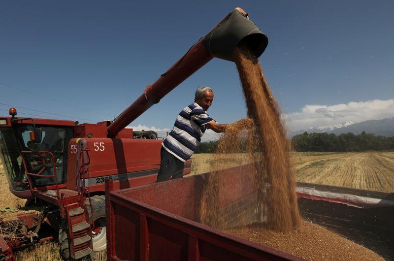 Trigo obtém maior ganho semanal em 6 anos em meio a problemas climáticos
