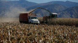 Exportações de grãos da Ucrânia em 2021/22 têm alta de 49% até o momento
