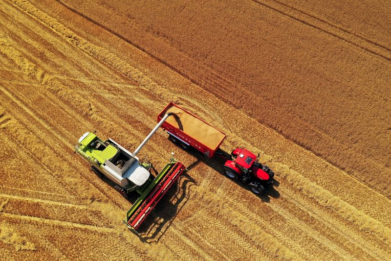 Condições da safra de trigo da França recuam; colheita segue lenta