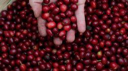 Brasil estima que danos por geadas atinjam até 11% da área de café arábica