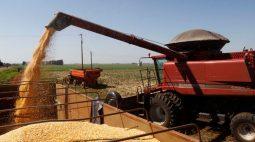 Exportação de milho do Brasil pode recuar mais de 60% em julho após quebra na safrinha