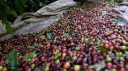 Café arábica sobe 9,9% com retorno do frio ao Brasil; açúcar também avança