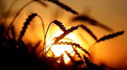 USDA surpreende e reduz avaliação das condições das safras de milho e soja nos EUA