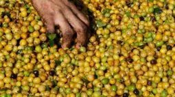 Preços do café arábica enfraquecem na ICE, açúcar bruto avança