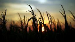 Produção de milho 20/21 da África do Sul deve avançar 7%