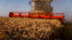 IGC reduz estimativa para safra global de trigo em 2021/22