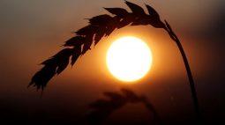 Exportações de grãos da Ucrânia chegam a 2,5 mi t em 2021/22