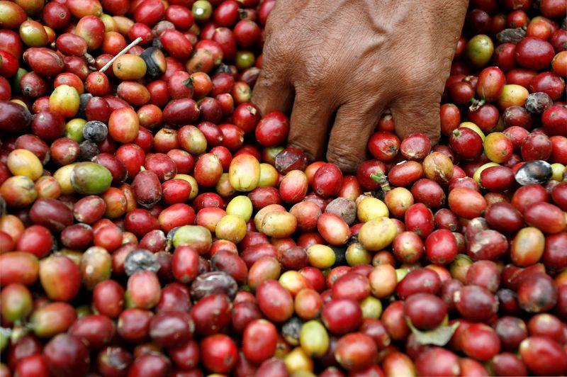 Exportação de café robusta de Sumatra, na Indonésia, recua 66% em julho