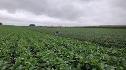 Anec prevê queda brusca nas exportações de milho do Brasil