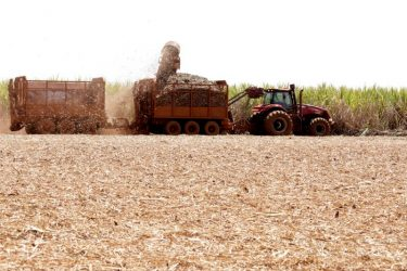 Produção de açúcar do Brasil deve ver leve recuperação em 2022/23, diz consultoria
