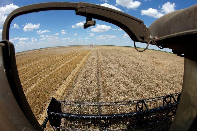 Ucrânia conclui safra de trigo 2021 com colheita de 33 mi t, alta de 33%
