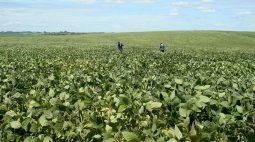 BrasilAgro vende por R$ 130,1 mi fatia da Fazenda Rio do Meio em Correntina (BA)