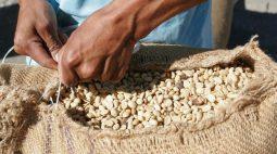 Café arábica salta 3% na ICE com compra de fundos, açúcar bruto também avança
