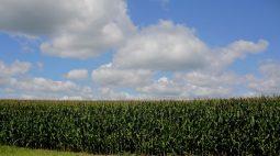Preços do milho avançam 2% com mercados firmes; soja marca ganho modesto