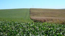 Plantio de soja mais que dobra no Paraná na semana e atinge 38% da área, diz Deral