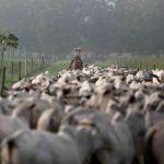 Ministério da Agricultura suspende produção de carne bovina para a China, diz O Globo
