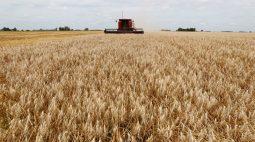 China vende 88,5% do trigo oferecido em leilão de reservas estatais