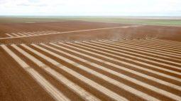 Plantio de soja avança para 36,8% das áreas no Brasil, diz Conab