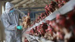 Aumento de gripe aviária na China mostra risco de variações rápidas, dizem especialistas