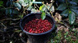Preços do café na ICE caem mais que 3%; açúcar fecha em alta