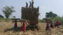 Estimativa de produção de açúcar da Índia cai 1,6% para a safra 2021/22, diz ISMA