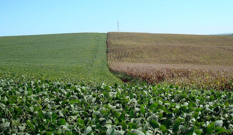 Paraná faz leve corte em projeção para soja 2021/22 a 20,8 mi t