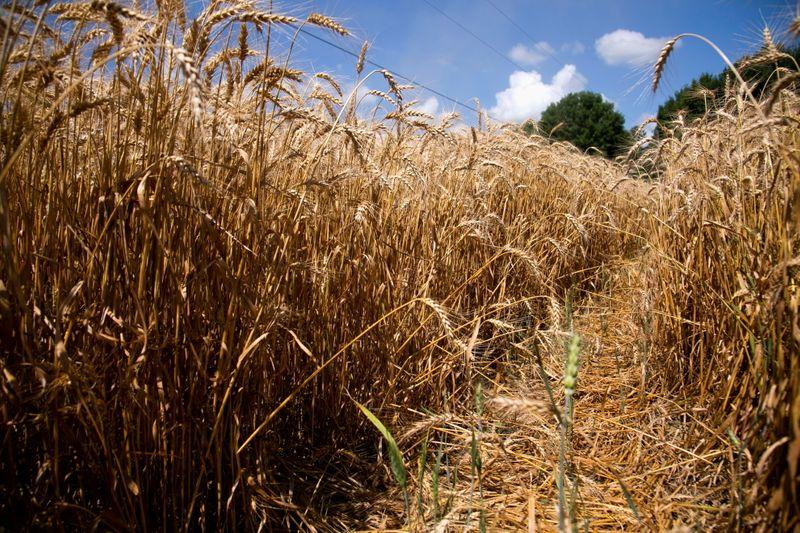 Preços de commodities agrícolas devem perder força na década; emissões aumentarão