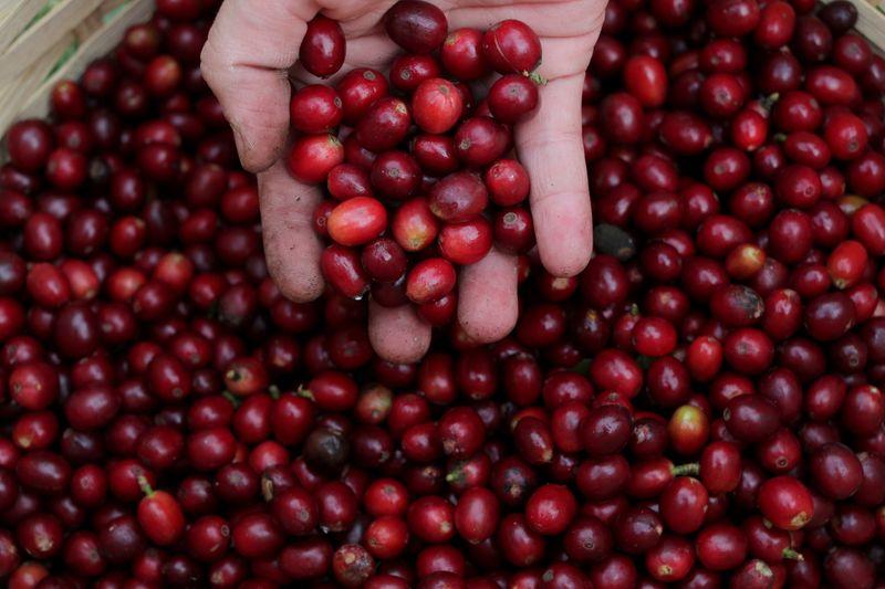 Carvalhaes cita número não desprezível de cafezais atingidos por geadas