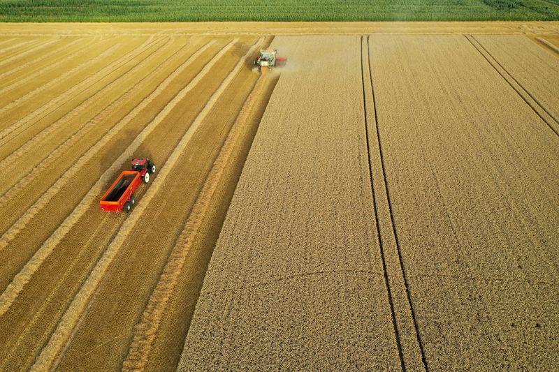 Copa-Cogeca projetam avanço da safra de trigo soft da UE para 130 mi t