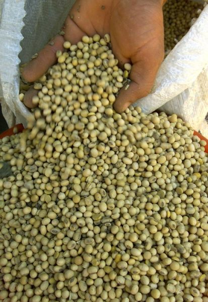 Importações de soja pela UE totalizam 15,35 mi t em 2020/21
