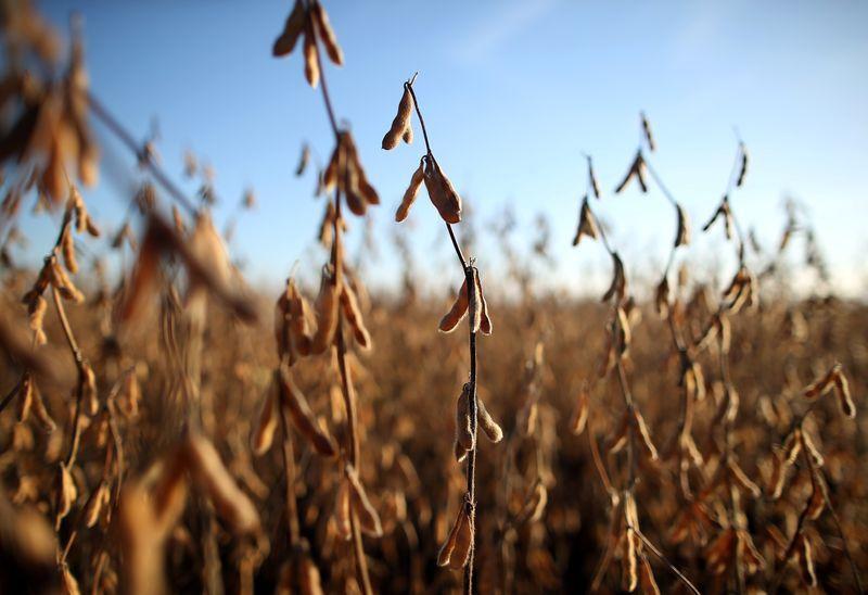 Agricultores argentinos registram vendas de 23,7 mi t de soja de 2020/21