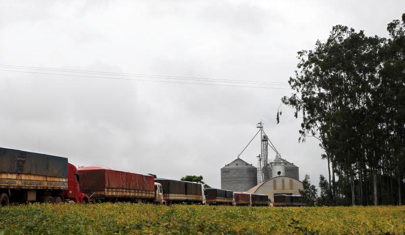 Conab reduz previsão de safra de milho do Brasil em 3 mi t para 93,38 mi t