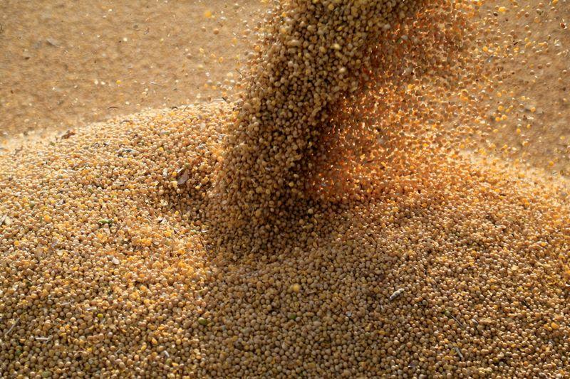 Datagro aponta que vendas de soja 20/21 do Brasil avançam pouco após piora dos preços