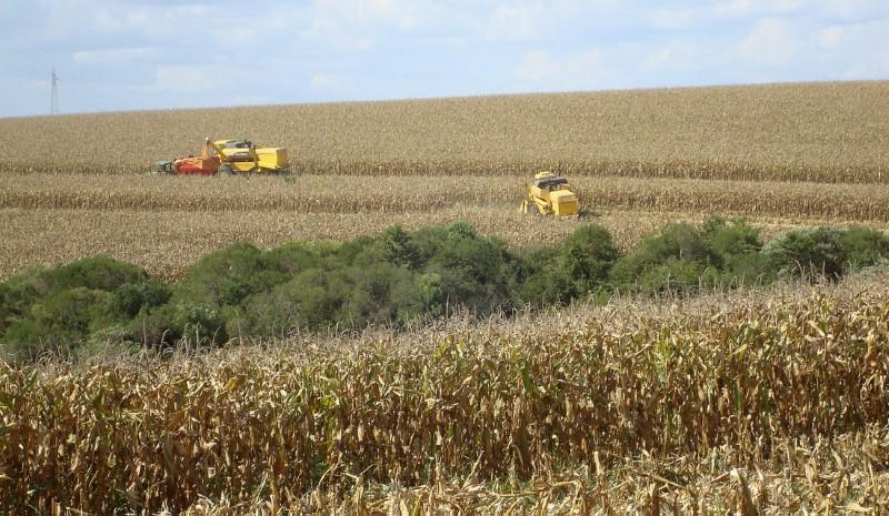 Chuvas levam milho a acumular queda semanal de 12% em Chicago