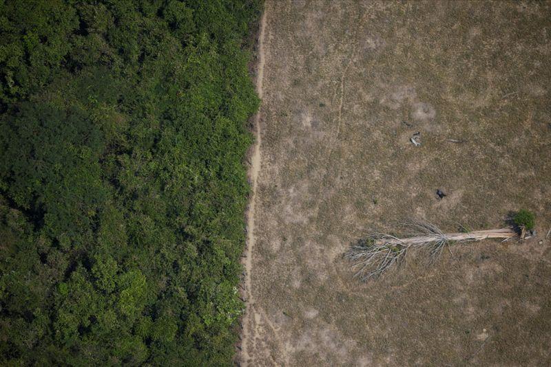 Promessa do Brasil sobre Amazônia é necessária para acordo UE-Mercosul, diz embaixador europeu