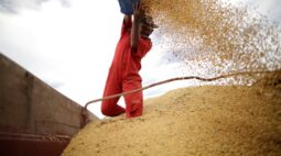 StoneX reduz projeção para soja 2020/21 no Brasil após falta de chuvas em dezembro