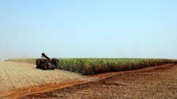 São Martinho aprova investimento de R$640 mi para usina de etanol de milho