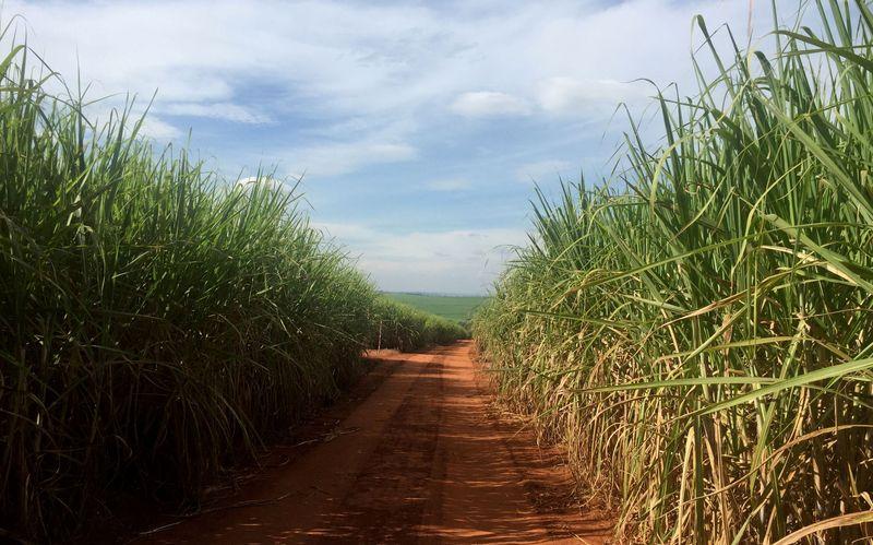 Fixação de preço de açúcar brasileiro avança a 80,5% da exportação 21/22, diz Archer