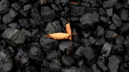 Carvão metalúrgico fecha estável na China após forte oscilação