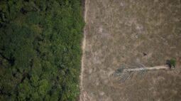 Povos indígenas processam controladora do GPA por destruição da Amazônia