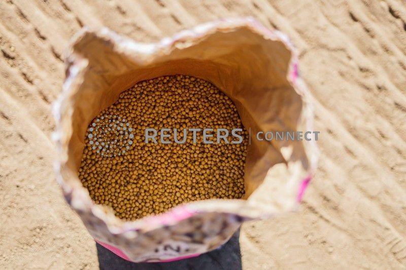 Milho e soja recuam; óleo de soja tem queda com preocupações sobre lei para biocombustíveis