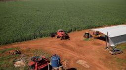 Seca derruba 2ª safra de milho do Brasil 2020/21 a 65,3 mi t, diz Agroconsult