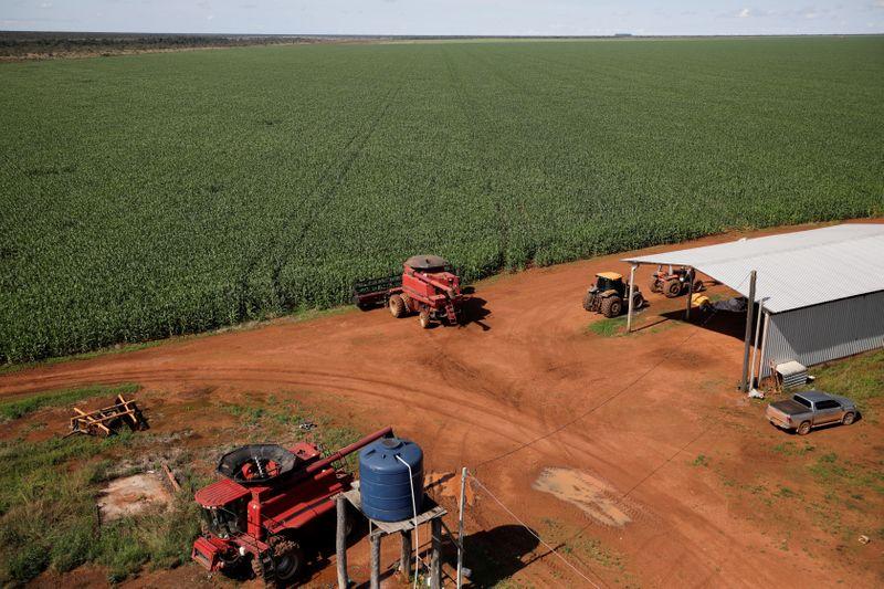 Seca derruba 2ª safra de milho do Brasil e importação deve dobrar, diz Agroconsult