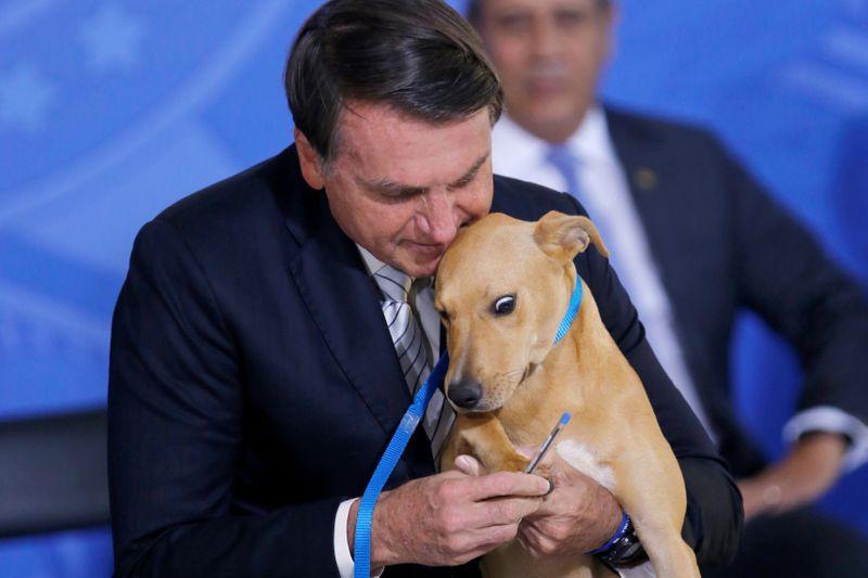 Bolsonaro sanciona projeto que eleva penas para maus-tratos a animais