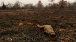Pantanal fecha setembro com pior índice de queimadas desde 1998