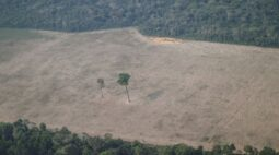 Governo leva diplomatas estrangeiros ao Amazonas semana que vem para tentar reverter imagem negativa
